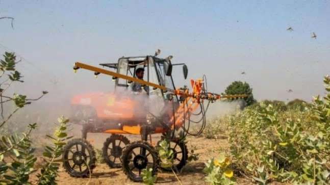 Rajasthan CM seeks Centre's help to protect crops from fresh locust attack
